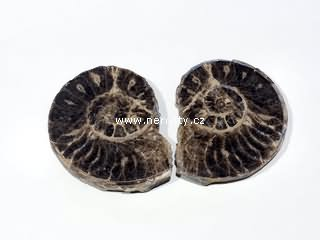 amonit + mammites nodosoides + řez