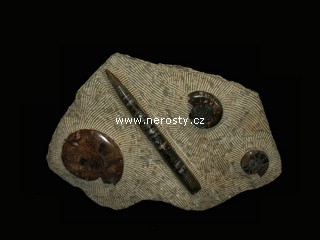 amonit + ortoceras + dekorativní deska