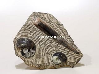 amonit + ortoceras + deska