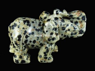 dalmatinit + slon