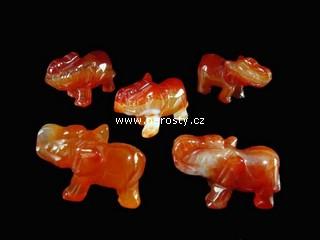 karneol + slon