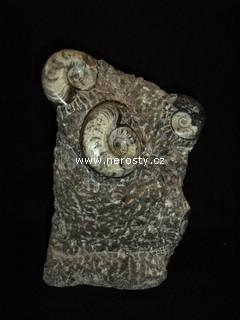 skulptura-amonit
