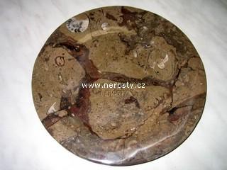 tac-z-fosilii