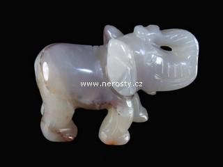 chalcedon, slon