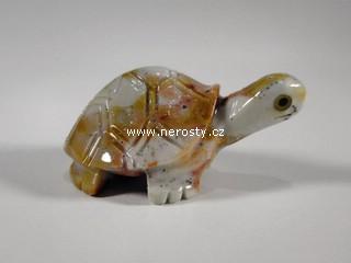 želva, kalcit