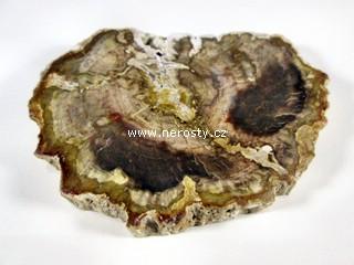 zkamenele-drevo