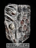 vinotéka 16 lahví, MinasGerais