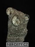 skulptura amonit