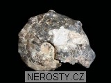amonit,mammites nodosoides