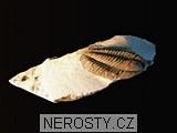 trilobit, MinasGerais