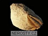 trilobit,termierella