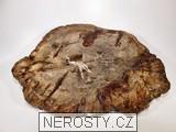zkamenělé dřevo,řez