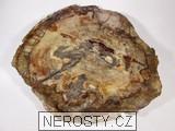 zkamenělé dřevo, MinasGerais