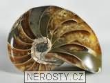 loděnka,cymatoceras sp.