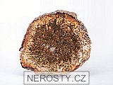 zkamenělé dřevo, řez
