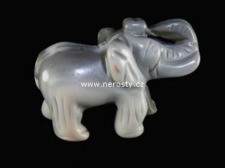 rohovec + slon